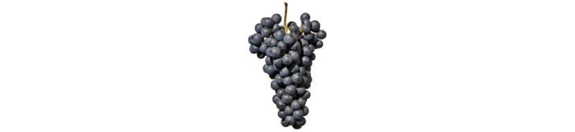Lagrein: Trentino Alto Adige wines